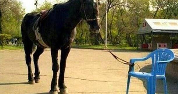 paard-vastgemaakt-aan-stoel